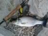 MikeB Wiper Lake Monroe May 16