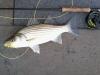 MikeB Wiper on Lake Monroe  Oct 29
