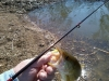 LM Bass March 11
