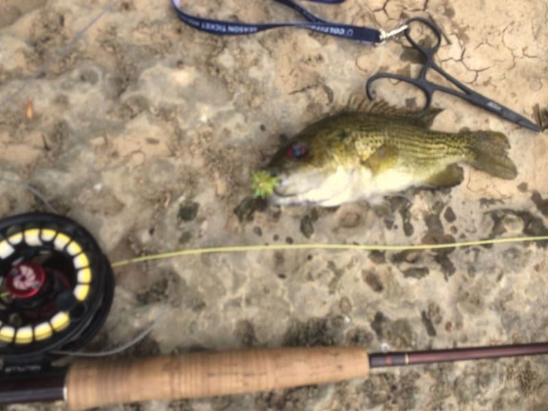 Rock Bass Local Creek