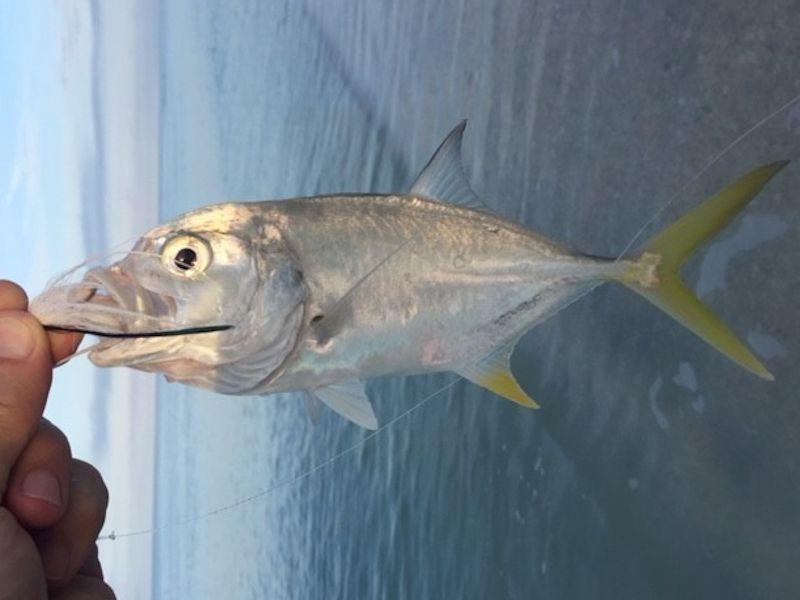 Sanibel Island Jack Crevalle