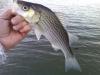 Lake Monroe Wiper February 28