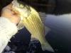 Lake Monroe Wiper February 29