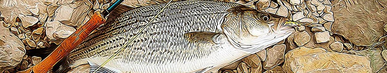 Hoosier Fly Fishers